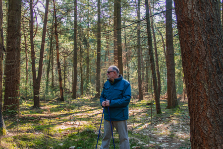 Attractive mature man standing in green sunny forest, nordic walking, healthy lifestyle