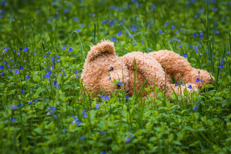 A soft toy, a teddy bear is lying lonely in the green grass of a spring forest between blue flowers.