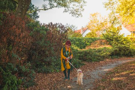 Modern beautiful woman of seventy plus in yellow clothes walking with her old dog in the autumn park of small town in Netherlands.