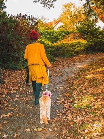 Modern senior woman in yellow clothes walking with her old dog in the autumn park, view from the back.
