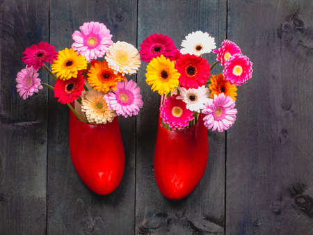 Two red wooden red clog with pink, yellow and red gerbera flowers, on gray wooden background, top view.