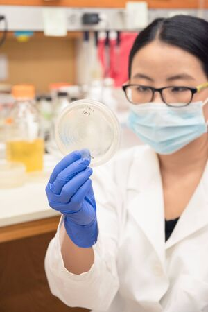ecoli: Scientist working on E.Coli plates