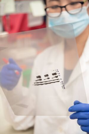 electrophoresis: Scientist working on gel results Stock Photo