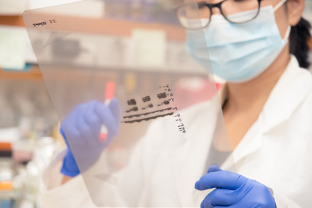 Scientist working on gel results Stock Photo