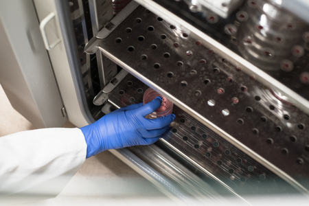 Cell culture incubator Stock Photo - 61551926