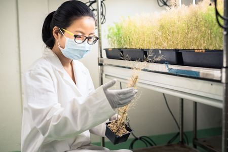 chamber: Researcher in the plant growth chamber
