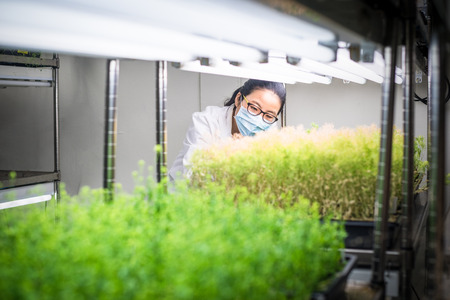 Researcher in the plant growth chamber
