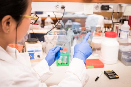 blot: Researcher working on Western Blot results
