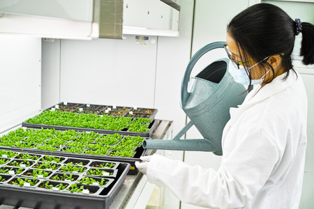 chamber: scientist working in the plant growth chamber