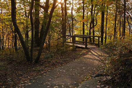 allegheny: hiking trail in the fall season