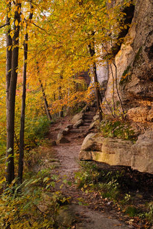 hiking trail: hiking trail in the fall season