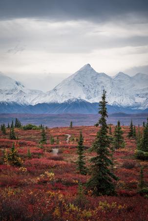 Denali National Park landscape in Autumn