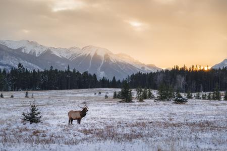 Banff National Park landscape Stock Photo