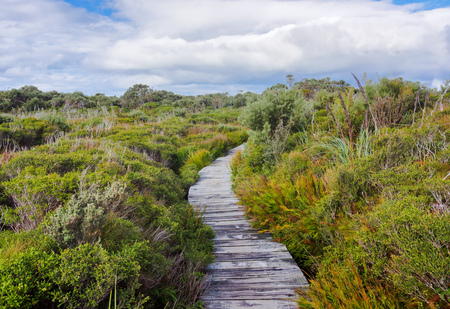 Boardwalk in beautiful wet land landscape