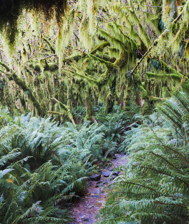 Rainforest along the Milford Track, New Zealand