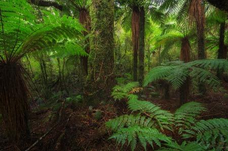 New Zealand rainforest details landscape