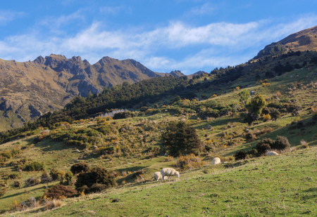Rural landscape of New Zealand Stock Photo - 102192169