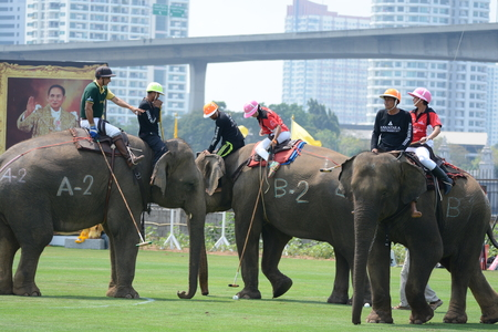 14th: 14th Kings Cup Elephant Polo Tournament held in Bangkok 10-13 March 2016.