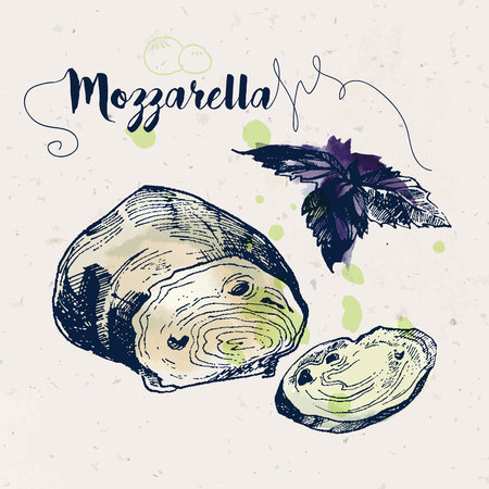 mozzarella cheese: Hand drawn mozzarella cheese and basil leaves with watercolor stains on craft paper texture. Ink drawn illustration. Vintage style.
