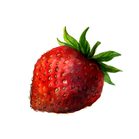 Watercolor strawberry isolated on white background. illustration.
