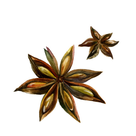 anise: Watercolor anise isolated on white background. illustration Illustration