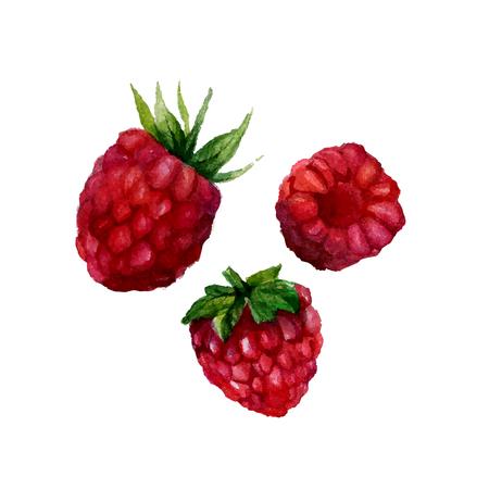 수채화 딸기 흰색 배경에 고립입니다. 삽화.