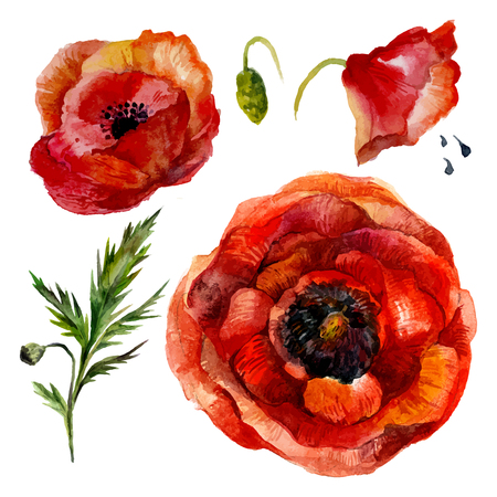 Watercolor Poppies Set. Isolated on white background. Vintage style. Stock Illustratie