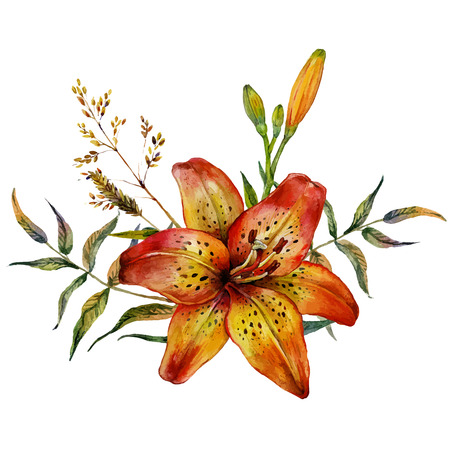 Watercolor Tiger lily with wild herbs. Isolated on white background Stock Illustratie
