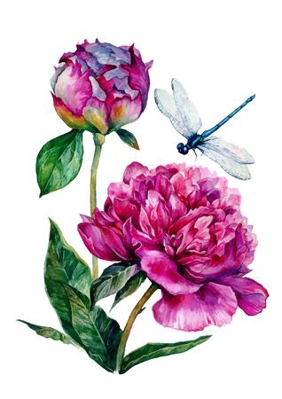 Watercolor pioenen en libel. illustratie op een witte achtergrond