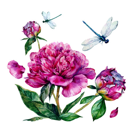 Watercolor peonies and dragonfly.  illustration isolated on white background Stock Illustratie