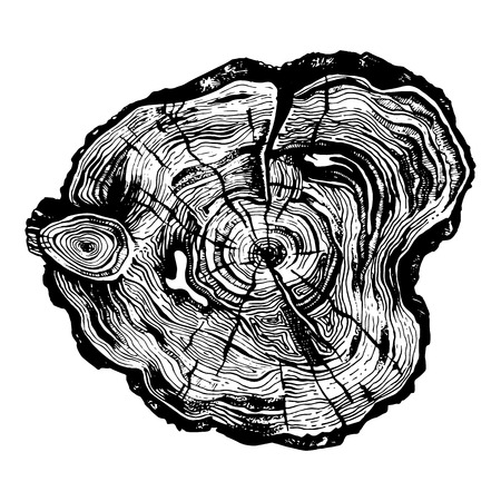Hand drawn illustration of wood saw cut. Highly detailed ink art in engraved style