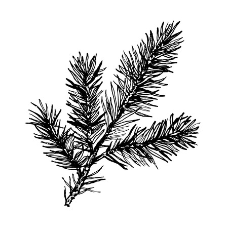Hand drawn pine tree branch isolated on white background. Ink illustration in vintage engraved style Ilustração