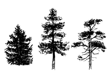 Hand drawn set of conifer trees isolated on white background. Ink illustration in vintage engraved style