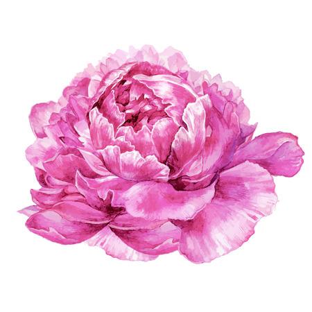 Aquarell Hand gezeichnet Illustration der rosa Pfingstrose Blume isoliert auf weißem Hintergrund. Botanische Illustration im trendigen Vintage-Stil.
