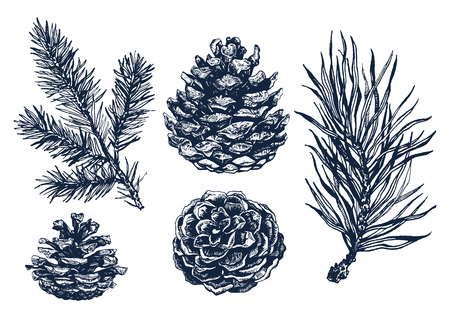 Twigs: Hand drawn forest collection of pine tree branches and pine cones isolated on white background. Ink illustration in vintage engraved style