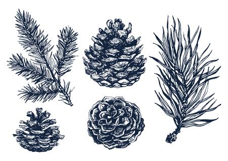 Mano bosque dibujado colección de ramas de pino y piñas aisladas sobre fondo blanco. Ilustración de tinta en estilo grabado vintage