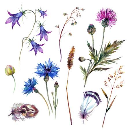 수레 국화, 엉겅퀴, 스피카, 블루 벨과 흰색 배경에 고립 된 깃털을 포함 손으로 그린 수채화 여름 야생화 컬렉션입니다. 트렌디 한 빈티지 스타일