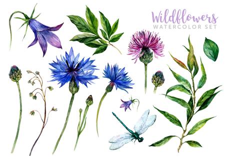 손으로 그린 수채화 여름 야생화는 수레 국화, 엉겅퀴, 버드 나무 가지, 벨과 흰색 배경에 고립 잠자리를 포함하여 설정합니다. 트렌디 한 빈티지  일러스트