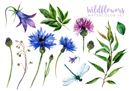 Hand drawn watercolor summer wildflowers set including cornflower, thistle, willow branch, bell and dragonfly isolated on white background. Realistic illustration in trendy vintage style.