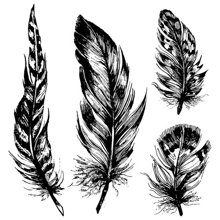 Collection de hibou, le faisan, le paon, le geai bleu, le corbeau, le pigeon et d'autres plumes d'oiseaux. Main encre illustration tirée dans un cadre rustique à la mode, boho, style grunge.