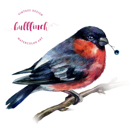 Watercolor Bullfinch on a bare branch with berry in its beak isolated on white. Drawing of a bird with grey and pinkish plumage. Christmas symbol. Winter birdie with red breast feathers. Vintage style Иллюстрация