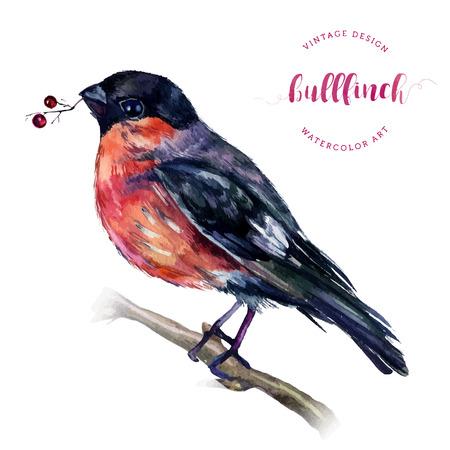 Watercolor Goudvink op een kale tak met bessen in zijn snavel op wit wordt geïsoleerd. Tekening van een vogel met grijs en roze veren. Kerstmis symbool. Winter birdie met rode borst veren. Vintage-stijl