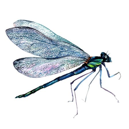 Watercolor Vintage Style Illustration of Green Dragonfly. Detailed Painting of Damselfly with Transparent Wings. Illustration of Insect Anisoptera isolated on White. Stock Illustratie