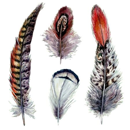Collection of Watercolor Pheasant Feathers. Wild Nature Bird Plumage. Boho Decoration Elements Isolated on White. Vintage Design. Illustration in Realistic Style.