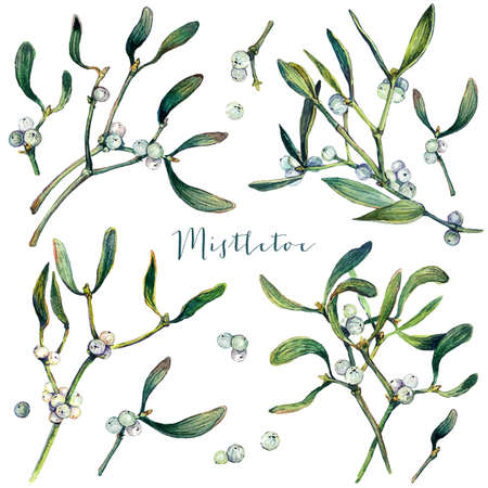 Watercolor Collection of Mistletoe Branches. Christmas Floral Decoration. Evergreen Plant with White Berries. Hand Drawn Botanical Illustration. Vintage Style Mistletoe Drawing Isolated on White. Stock Illustratie