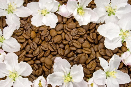 apple blossoms on a bed of coffee beans photo