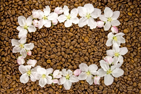 apple blossoms on coffee beans photo
