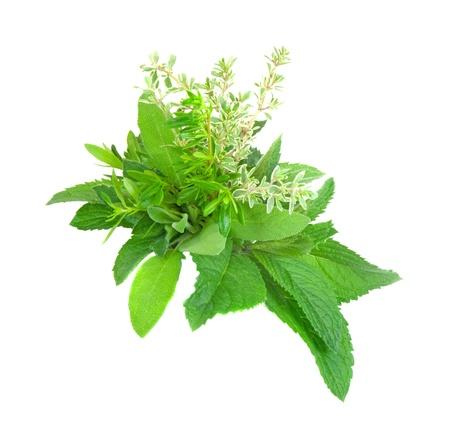potherb: Hierbas frescas