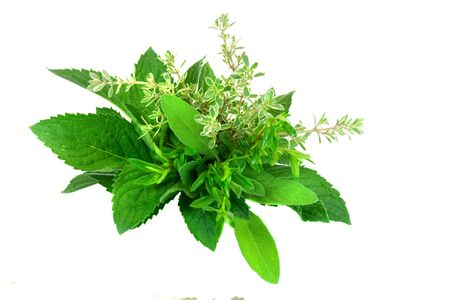white salvia: Fresh Herbs