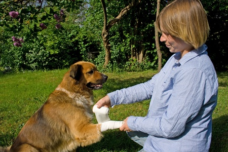Young woman is helping her dog photo